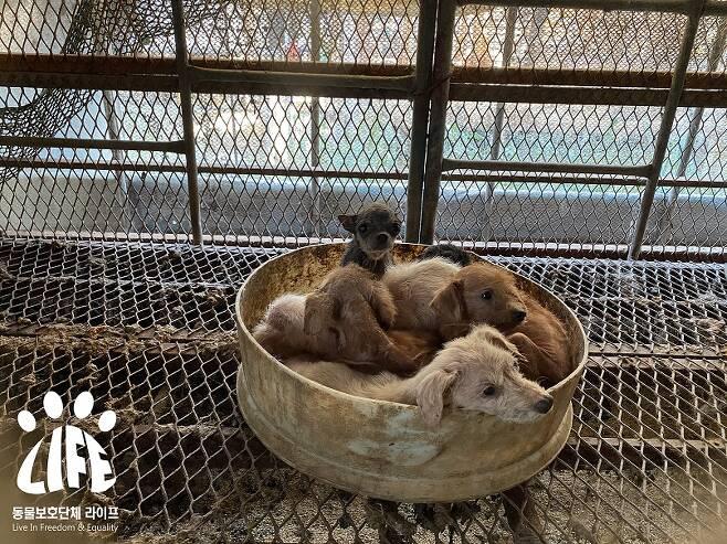 살아있는 강아지들은 극심한 피부병에 걸린 채 서로를 의지한 채 붙어있었다.