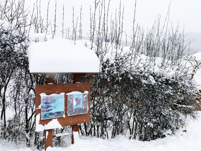 금곡영화마을 탱자나무 울타리 앞에 '태백산맥' 촬영지 안내판이 세워져 있다.