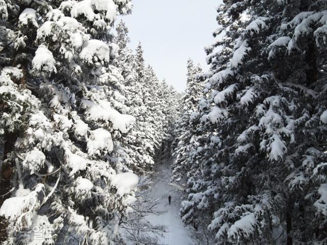 축령산 편백숲의 주 등산로는 금곡영화마을에서 추암마을까지 약 5.8㎞ 이어진다.