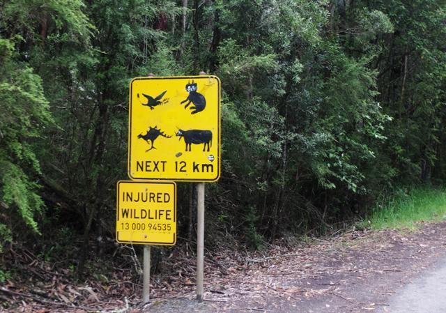어느 시간 많은 여행자가 캥거루를 공룡으로, 코알라를 고양이로 둔갑시켰다. 운전의 고단함이 잠시 사라진다. ⓒ강미승