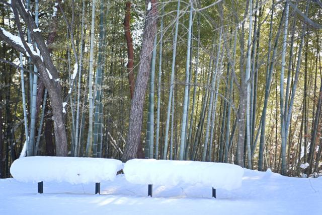 담양은 어디에나 대나무가 흔하다. 금성산성 오르는 탐방로에도 대나무가 숲을 이루고 있다.