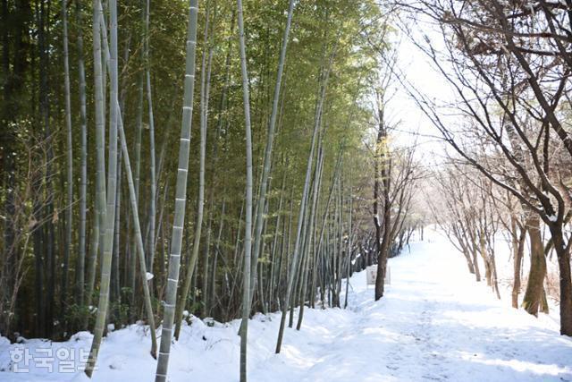 금성산성으로 오르길 길 초입은 경사가 완만한 임도다. 주변에 대나무가 숲을 이루고 있다.