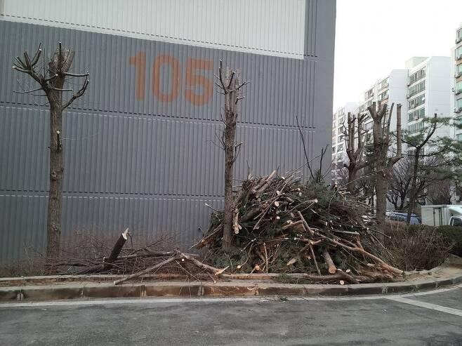 경기 부천시 괴안동 아파트에서 가지치기로 베어진 나무 잔해들이 높게 쌓여 있다.