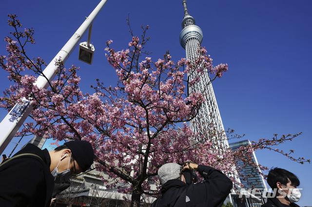 [도쿄=AP/뉴시스]23일 일본 도쿄 스카이트리 인근에서 코로나19 확산 방지를 위해 마스크를 쓴 사람들이 꽃망울을 터트린 벚꽃을 보고 있다. 도쿄도는 이날 275명의 코로나19 신규 확진자가 확인돼 사흘 연속 300명을 밑돌았다. 2021.02.23.