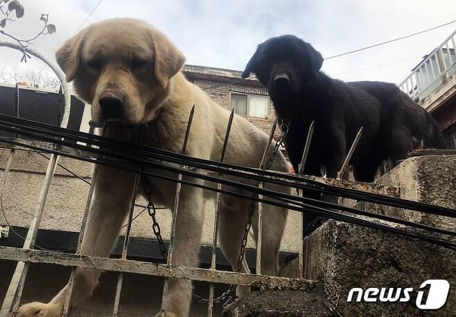 테이프로 입이 칭칭 감겨 있던 강아지(왼쪽). 사진 동물구조119 제공 © 뉴스1
