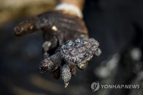 해상 기름유출로 해변에 밀려온 타르 덩어리에 파묻힌 바다 거북 [AP=연합뉴스 자료사진]