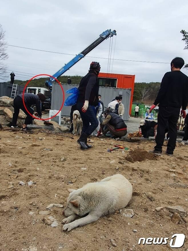 한정애 환경부 장관이 6일 배우 이용녀씨가 운영하는 경기 포천시 동물보호소를 찾아 청소를 하고 있다. 이 보호소는 최근 화재가 발생해 유기견 8마리가 죽고 견사 일부가 소실되는 등 2961만원(소방서 추산)의 재산 피해가 발생했다. 사진 팅커벨프로젝트 제공 © News1 최서윤 기자