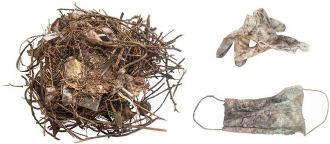 일부에서는 코로나 보호 장비 폐기물이 야생동물에 도움을 준 사례도 확인됐다. 네덜란드에서는 새가 버려진 마스크를 둥지 재료로 쓴 예가 있었다./네덜란드 레이덴대