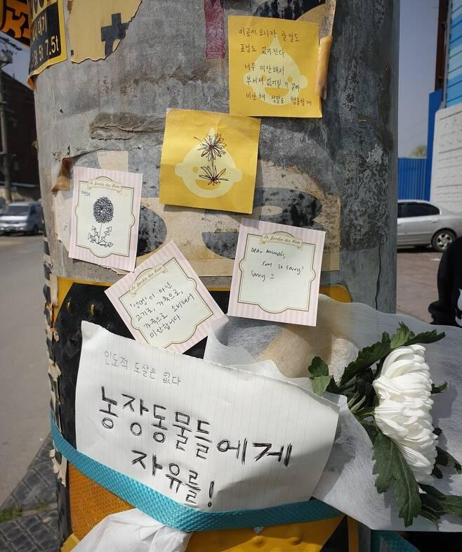 우리는 도살장 앞에 노란빛 애도를 옮겨 심었다. 포스트잇 쪽지를 도살장의 담에 써 붙였고, 새하얀 국화꽃을 앞에 놓아두고 그곳을 빠져나왔다.