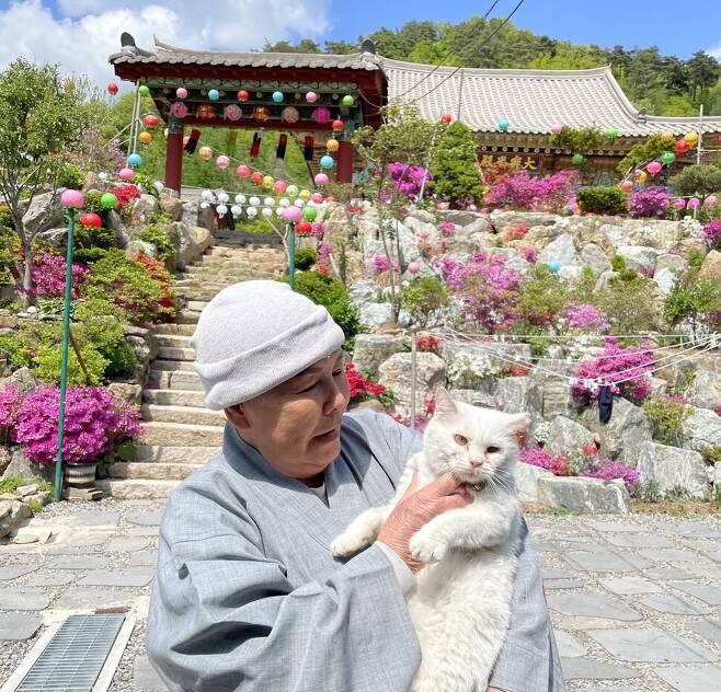 관음사 주지 혜영 스님은 2013년부터 유기 고양이를 돌본 인연으로 현재까지 사찰 내에서 고양이 20여 마리를 키우며 길고양이 급식소를 운영하고 있다.