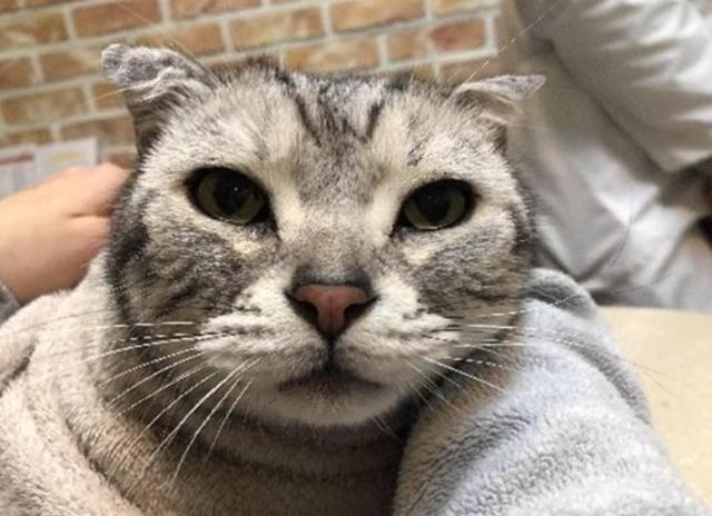 가습기살균제 사용 후 폐섬유화, 천식이 확인된 고양이 '구구'. 사참위 제공