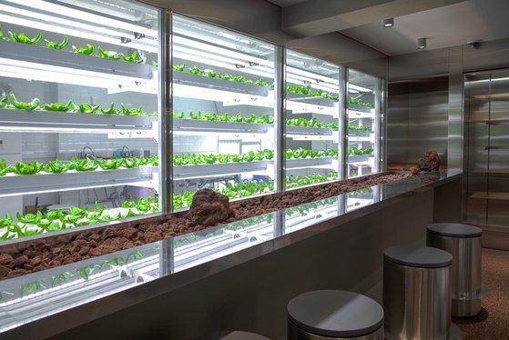 도산공원 식물성 전경. 스마트 팜 기술로 재배중인 바질과 로메인 등의 식물을 보며 음료를 즐길 수 있다. 사진 엔씽