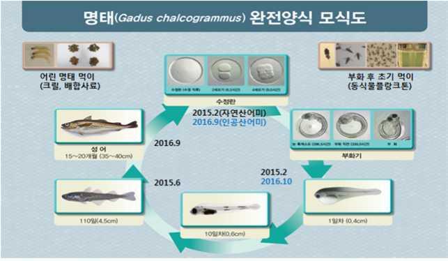 출처: 해양수산부