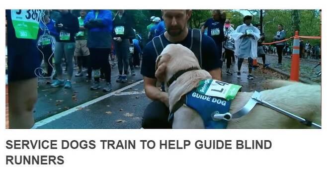 출처: www.guidingeyes.org 공식 홈페이지 캡처