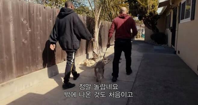 출처: '우리 개를 도와줘!'
