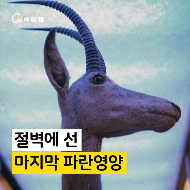 출처: 장노아 화가 <절벽에 선, 마지막 파란영양>