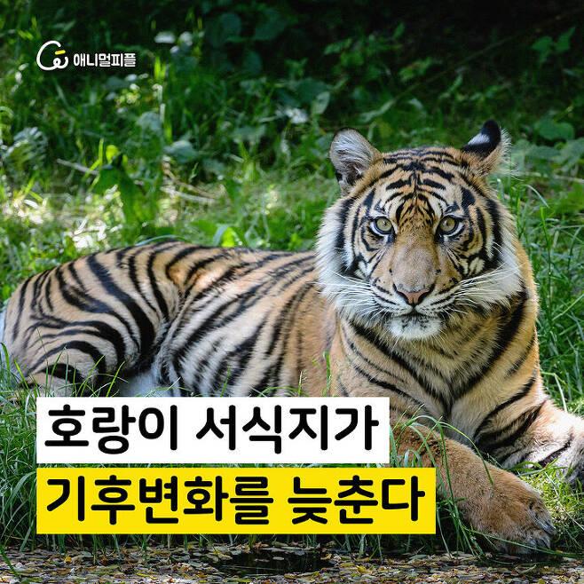 출처: 장노아 화가 <호랑이가 살 수 없는 세상이라면…>