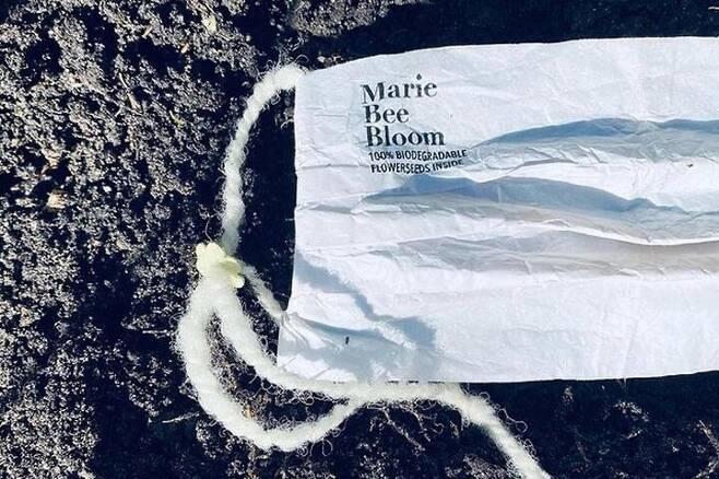출처: Marie Bee Bloom