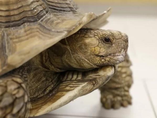 출처: https://abc7news.com/san-jose-preschool-vandalized-homeless-man-arrested-for-stabbing-turtle-tortoise-stabbed-sj-crime/10201819/