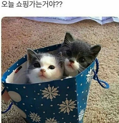 출처: https://www.instagram.com/p/CKgO_KMl8Fp/?utm_source=ig_web_copy_link