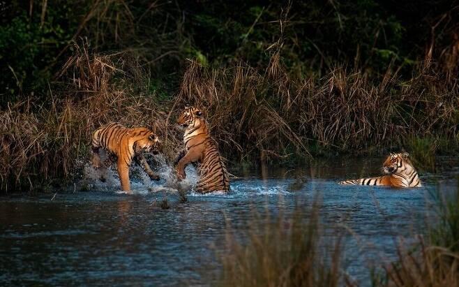 출처: 사진: 나바룬 마줌다르