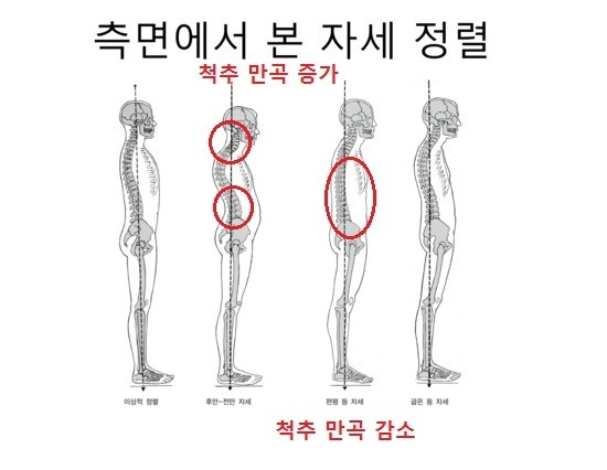 출처: Kendall '근육평가를 통한 자세교정 및 통증치료'