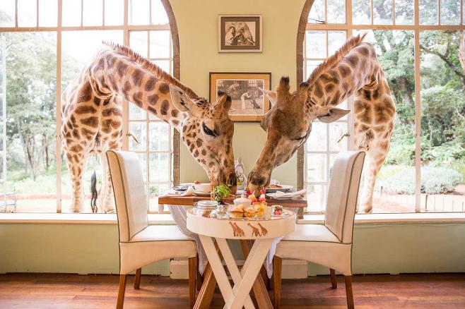 출처: ⓒ Giraffe Manor