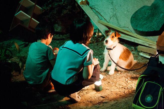 출처: 영화 <개를 훔치는 완벽한 방법> 사진 ⓒ 리틀빅픽처스, (주)대명문화공장