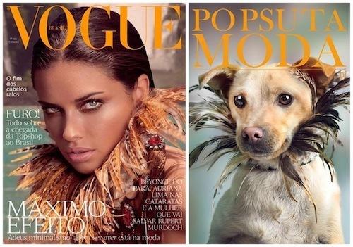 출처: https://3milliondogs.com/3-million-dogs/homeless-dogs-recreate-fashion-magazine-covers-and-the-results-are-too-cute/?gallery=8#galleryview