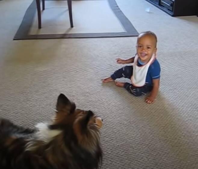 출처: https://wamiz.com/chiens/actu/entend-chien-crier-precipite-revient-faisait-chien-video-15014.html