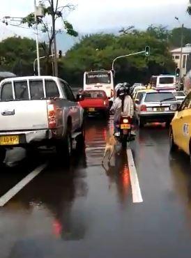 출처: https://wamiz.com/chiens/actu/filmes-train-abandonner-chien-rue-reaction-toutou-pleurer-monde-video-13462.html