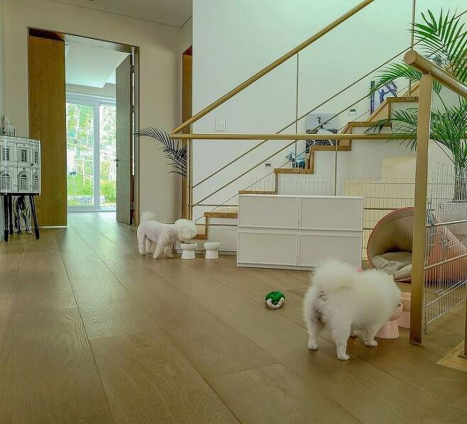 출처: <강아지 집> 정보 보러가기 (▲이미지 클릭)