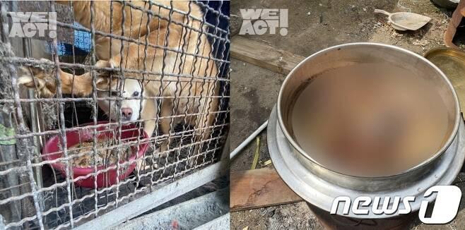 한 남성이 아들들이 보는 앞에서 개들을 잔혹하게 도살했다는 주장이 제기돼 충격을 주고 있다. (위액트 제공) © 뉴스1