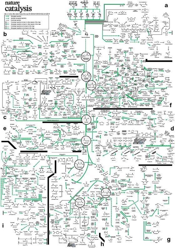 이상엽 교수가 개발ㆍ완성한 바이오 기반 화학물질 합성지도. 국제학술지 네이처 카탈리시스에 표지논문으로 게재됐다. [사진 KAIST]