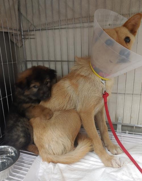 지난 19일 동물병원을 찾은 어미개 믿음이(오른쪽)와 축복이. 모자 유기견은 진료받는 동안 서로를 의지했다. 이서연씨 제공
