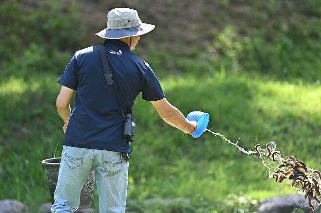 방사된 야생 따오기를 위해 미꾸라지를 공급하는 한영인 따오기 사육사.