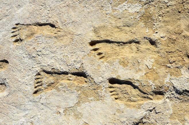 미국 뉴 멕시코주 화이트 샌드 국립공원에서 발굴된 2만3000년 전 발자국 화석. 주로 청소년이나 어린이들의 발자국이었다./미국 본머스대