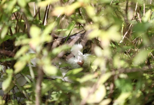 '한국 고양이의 날'인 9일 서울 서초구 방아다리 근린공원에 길고양이가 풀 숲에 숨어 있다. 연합뉴스