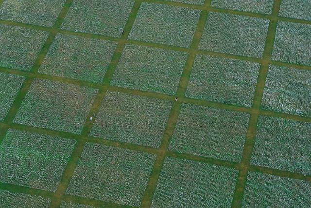 22일 미국 워싱턴 내셔널 몰에 코로나19 사망자를 추모하는 작품 '미국에서:기억하라'가 설치돼 있다. 워싱턴=AP 연합뉴스