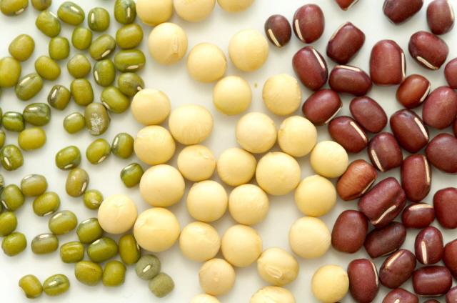 어떤 콩은 단백질보다 탄수화물이나 지방이 많은 것도 있다. 콩도 잘 따져 먹어야 한다. /클립아트코리아 제공